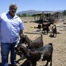 Турецкий клуб продал 18 футболистов, чтобы купить десять коз